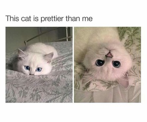 animal, cat, and pretty image