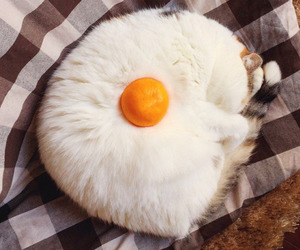cat, egg, and funny image