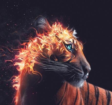 fire, wild, and orange image