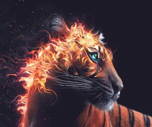fire, tiger, and wilderness image