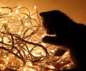 cat, light, and christmas image