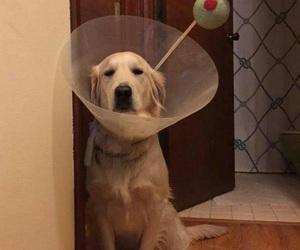 dog, funny, and martini image