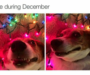 christmas, funny, and december image