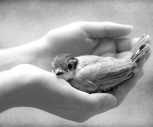 kindness and cute image