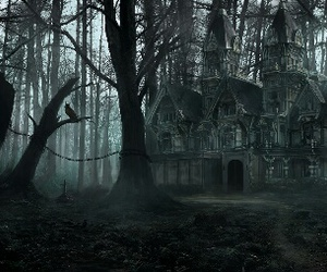 creepy, dark, and forest image