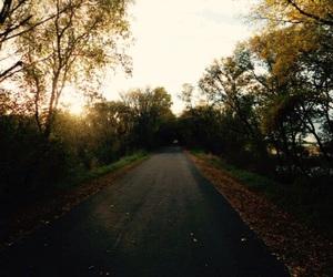 minnesota, nature, and trees image