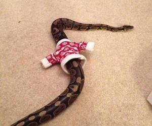 christmas, snake, and funny image