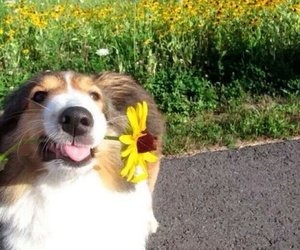 dog, dogs, and flower image