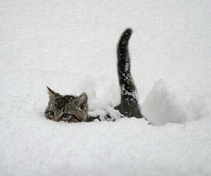animal, snow, and cat image