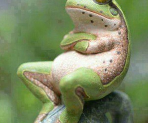 frog, heart, and not moving image