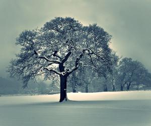 tree, winter, and snow image
