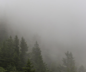 cold, forest, and paysage image