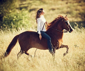 beautiful, horses, and western image