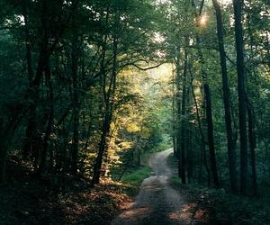 beautiful, nature, and wandering image
