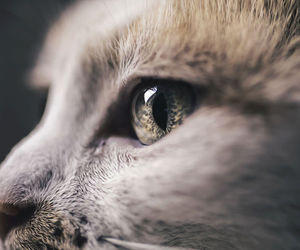 animal, cat, and delicate image