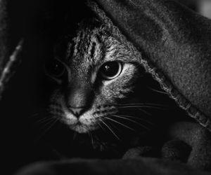 cats, memories, and photos image