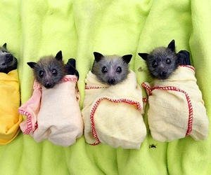 bats, baby, and animal image