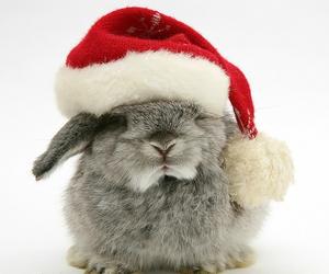baby animals, bunny, and christmas image