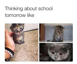 cat, sad, and school image
