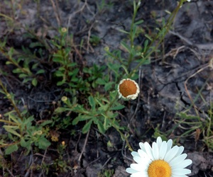 alone, camp, and daisies image