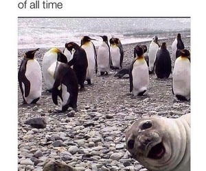 funny, penguins, and seal image