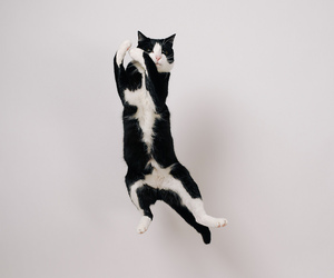 Action, cat, and jump image