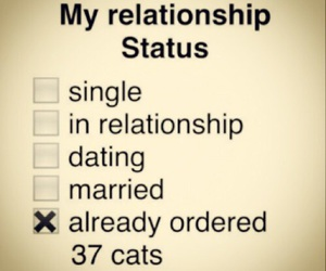 cats, dating, and single image