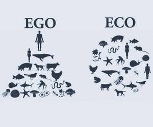 eco, ego, and animals image