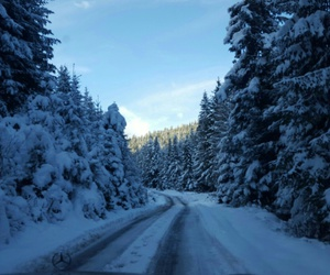 forest, Montenegro, and snowing image