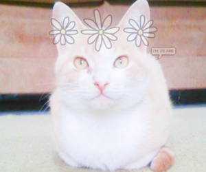cat, Collage, and kawaii image
