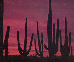 cactus, summer, and sunset image