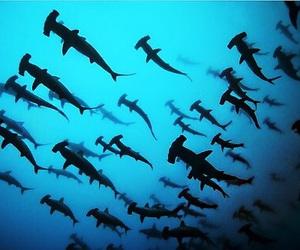 shark, sea, and ocean image