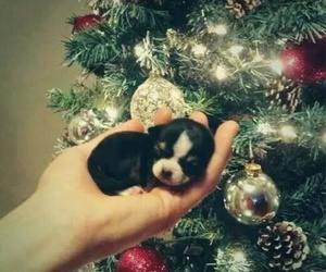 puppy, christmas, and dog image