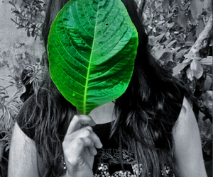 black, green, and photography image