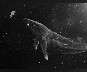 exo, whale, and sing for you image