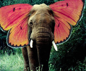 elephant butterfly wings image