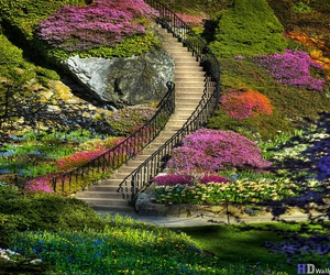 colourful, nature, and trees image