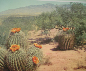 cactus, desert, and flowers image