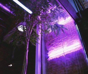 lights, purple, and tree image