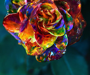 flowers, rose, and paint image