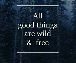 quote, wild, and free image
