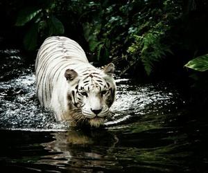 animali, animals, and natura image