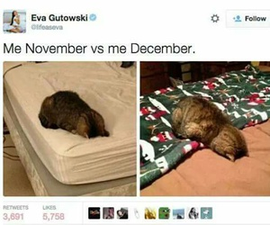 funny, cat, and december image
