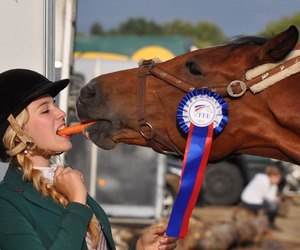 champion, horse, and pferd image