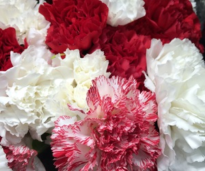 blooms, flowers, and carnations image