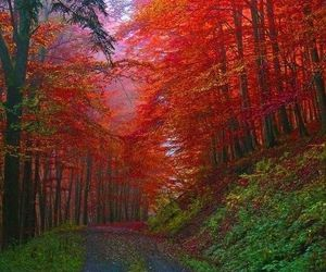 red, autumn, and forest image
