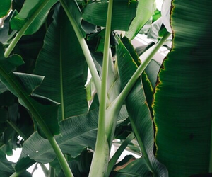 green, indie, and plants image