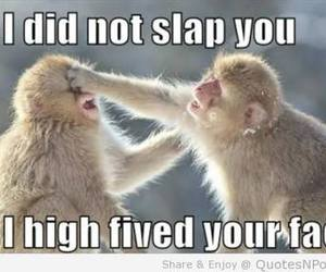 funny, lol, and monkey image