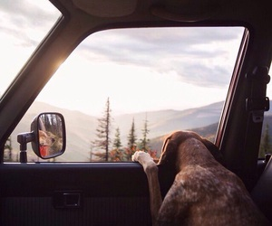 dog, nature, and mountains image