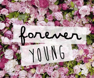 wallpaper, flowers, and forever image